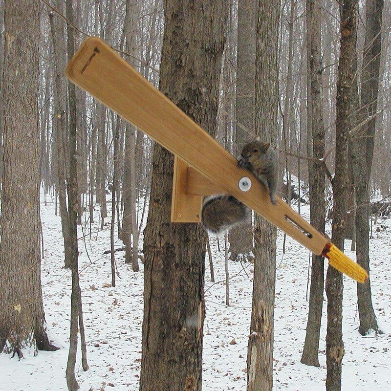 Birds Choice Cedar Arrow Squirrel Feeder & Reviews | Wayfair