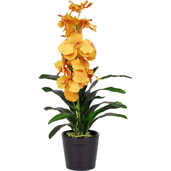 House Of Silk Flowers Faux Mango Vanda Orchid Flower In Vase Wayfair