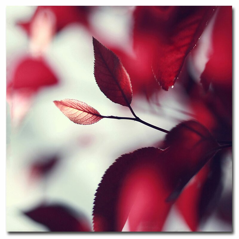 """""""When Spring is Red"""" by Beata Czyzowska Young Photographic Print on Wrapped Canvas"""