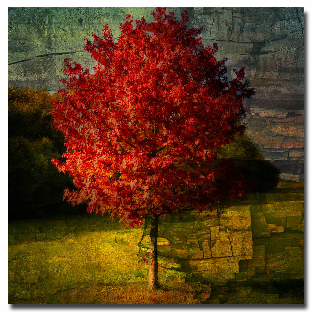 Trademark Art Autumn Red By Philippe Sainte Laudy Framed Painting Print On Wrapped Canvas Reviews Wayfair