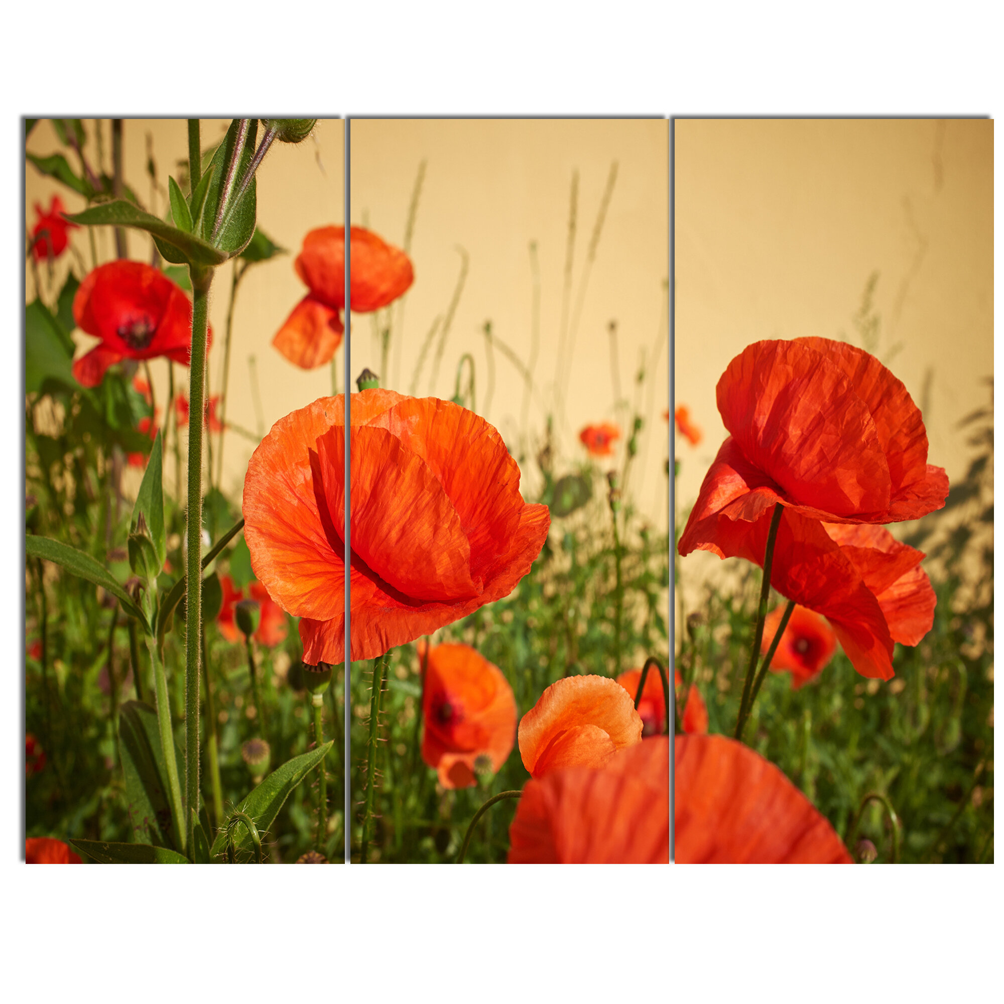 DesignArt \'Colorful Red Poppy Flower Field\' 3 Piece Photographic ...