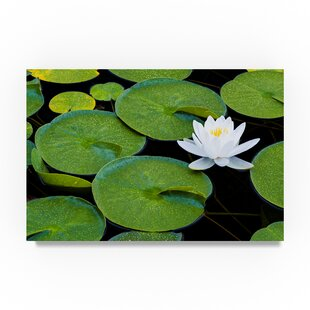 U0027Frog Living Roomu0027 Photographic Print On Wrapped Canvas
