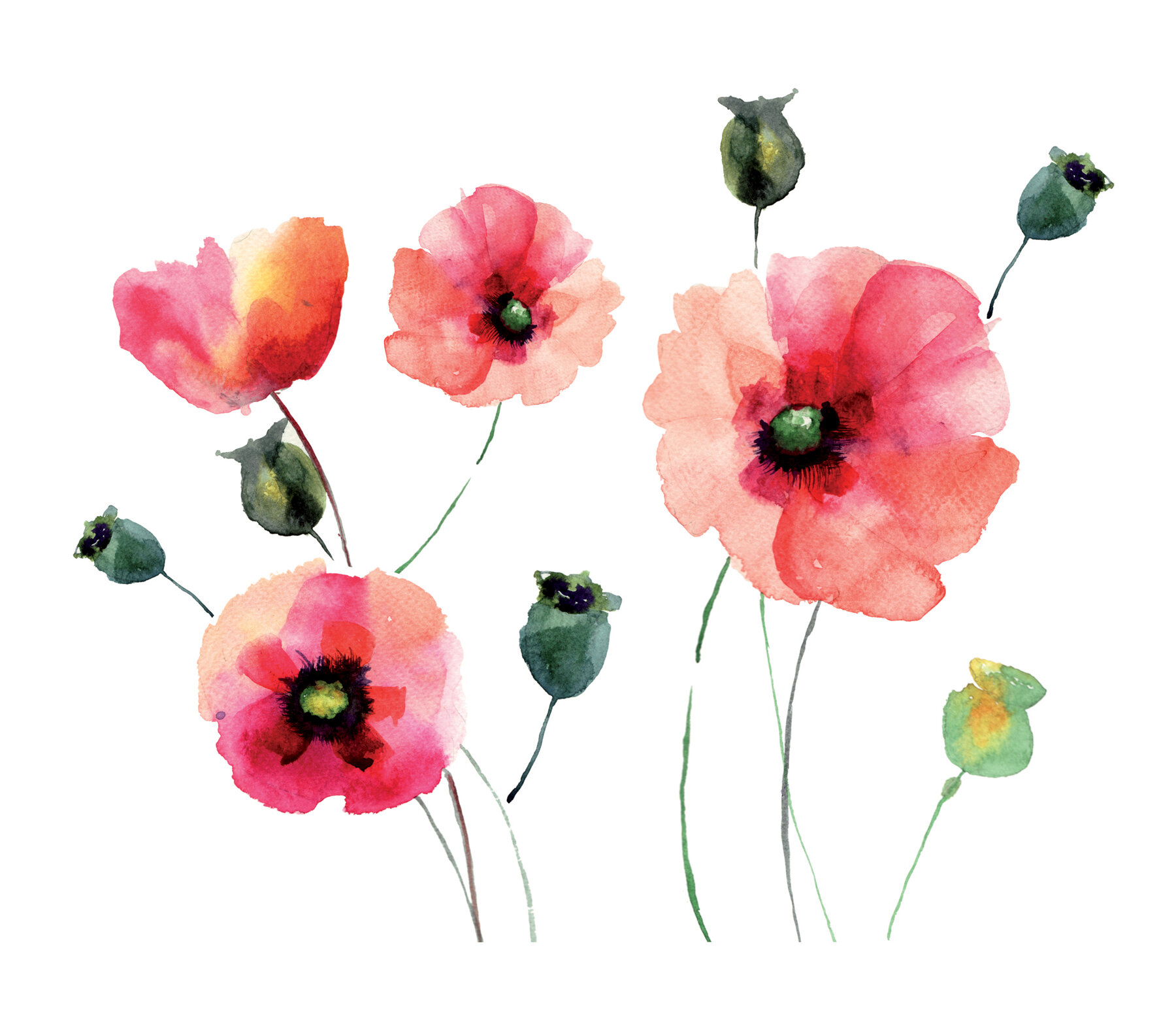 Wallpops Home Decor Line Watercolor Poppies Wall Decal Reviews