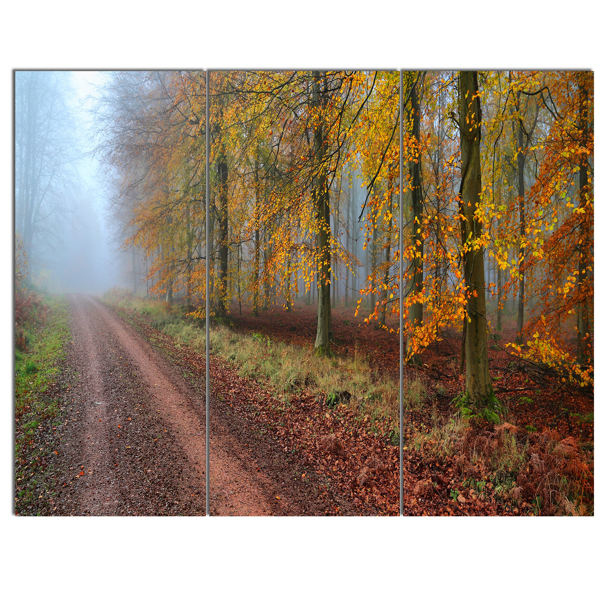 Designart Raising Sun In Fall Forest Panorama 3 Piece Photographic Print On Wrapped Canvas Set Wayfair