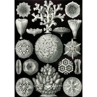 Evive Designs Vintage Seashells Iv By Julia Kearney Graphic Art Print Wayfair