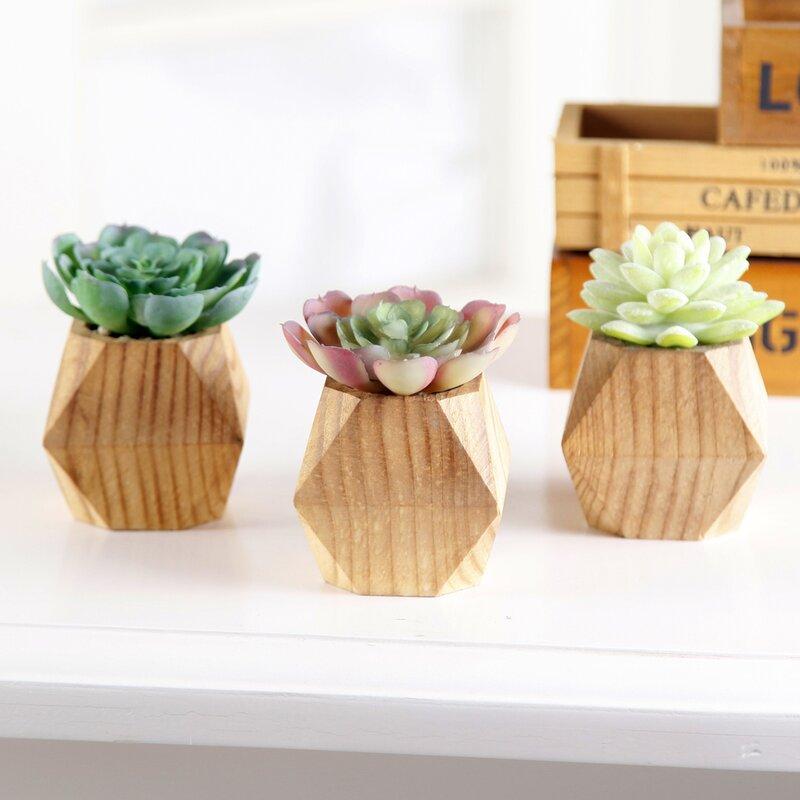 Primrue 3 Piece Succulent Plant In Pot Set Reviews Wayfair