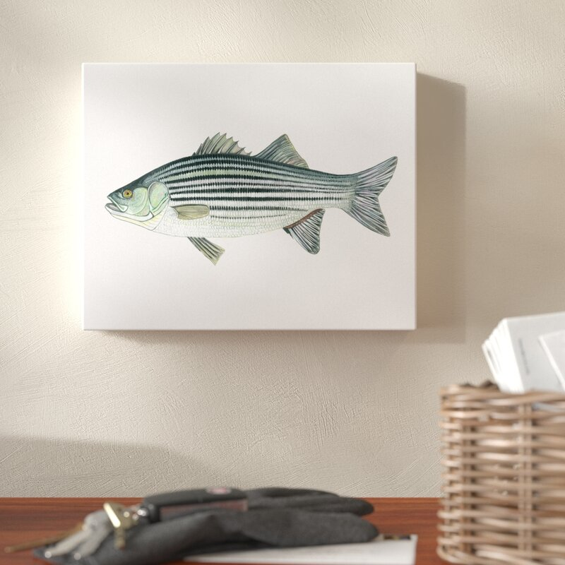 Millwood Pines Striped Bass Watercolor Painting Print Wayfair