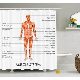 Human Anatomy Muscle System Diagram of Man Body Features Biological Elements Medical Heath Image Single Shower Curtain