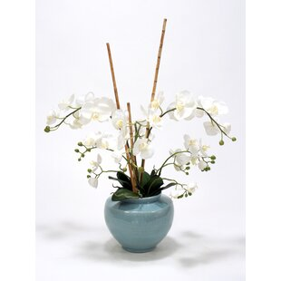 White Phaleonopsis Orchids, Arrorog Rattan in Ceramic Vase