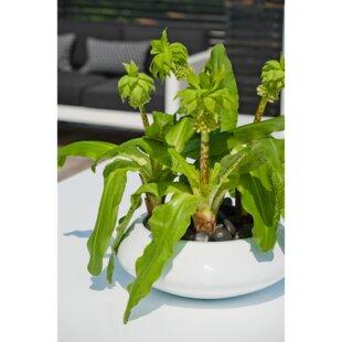 Basic Novel Fiberstone Pot Planter