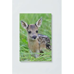 Fawn Motif Magnetic Wall Mounted Cork Board By Ebern Designs