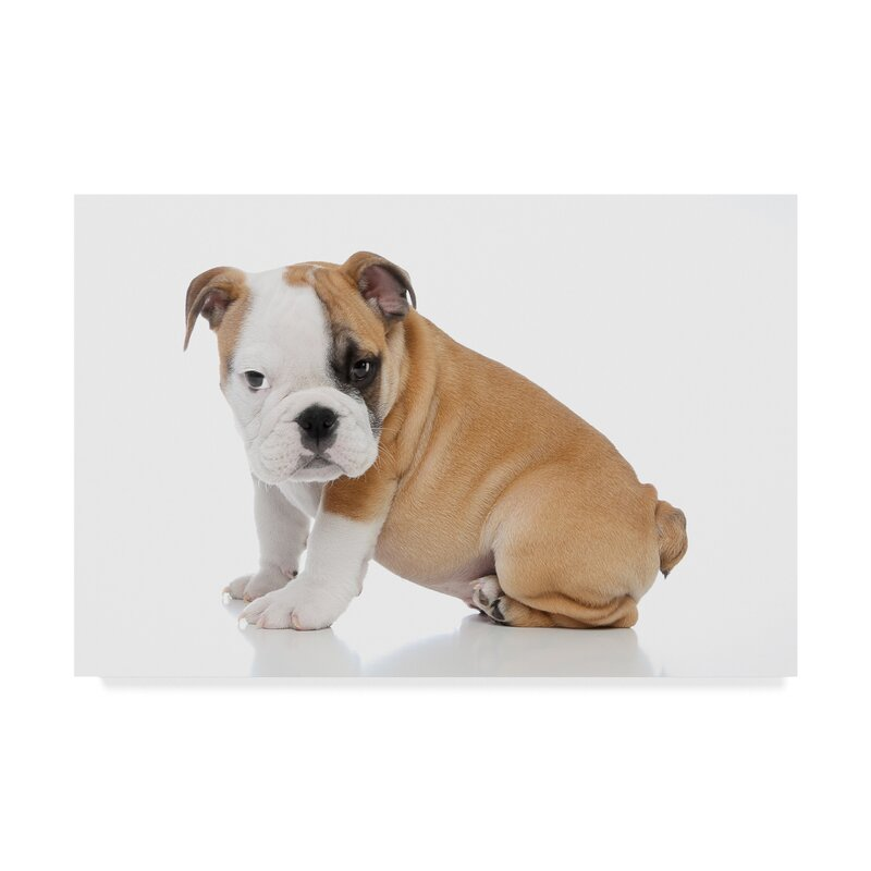 Trademark Art Baby English Bulldog