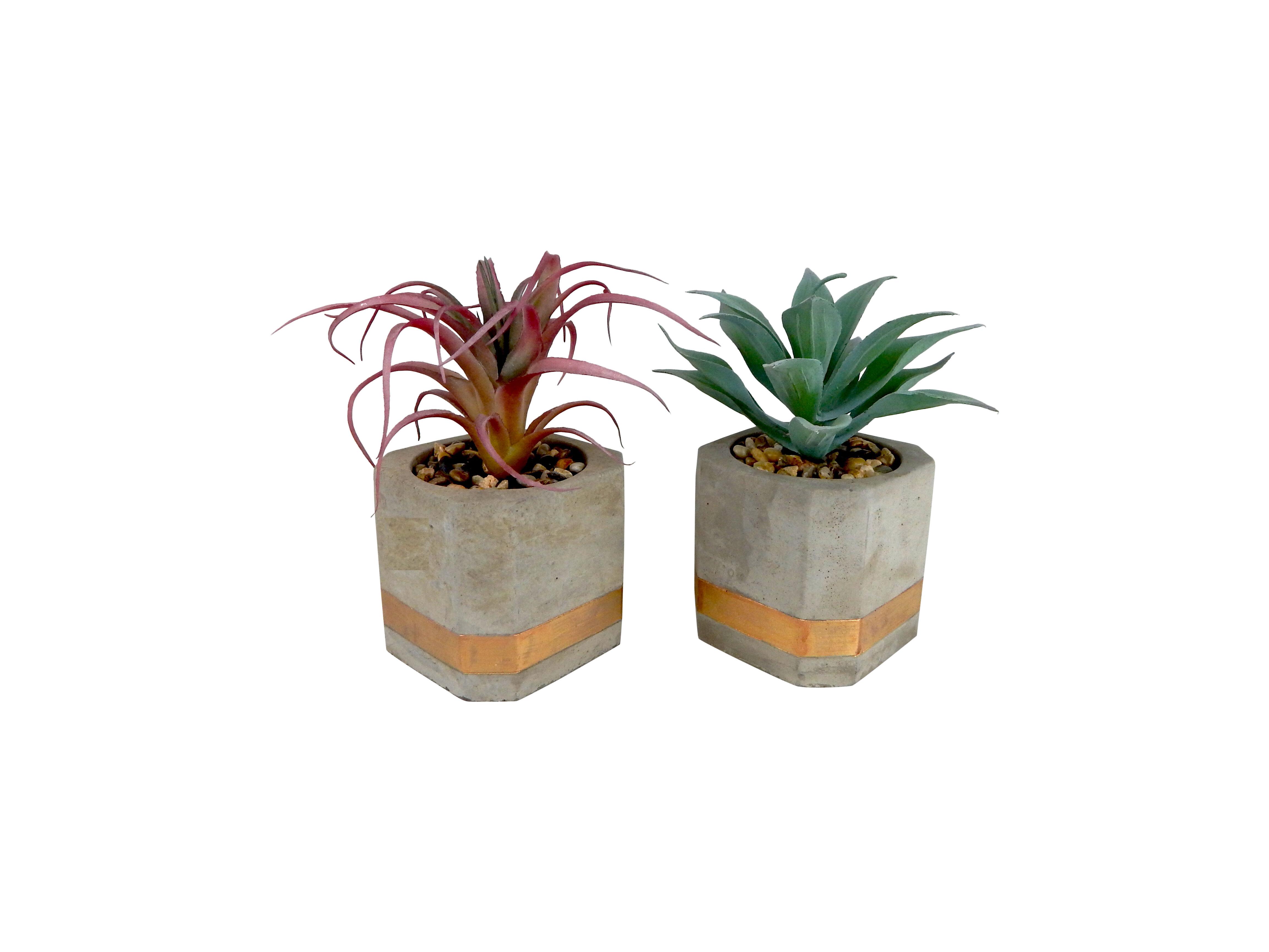 Wrought Studio 2 Piece Agave Succulent Plant In Pot Set Wayfair