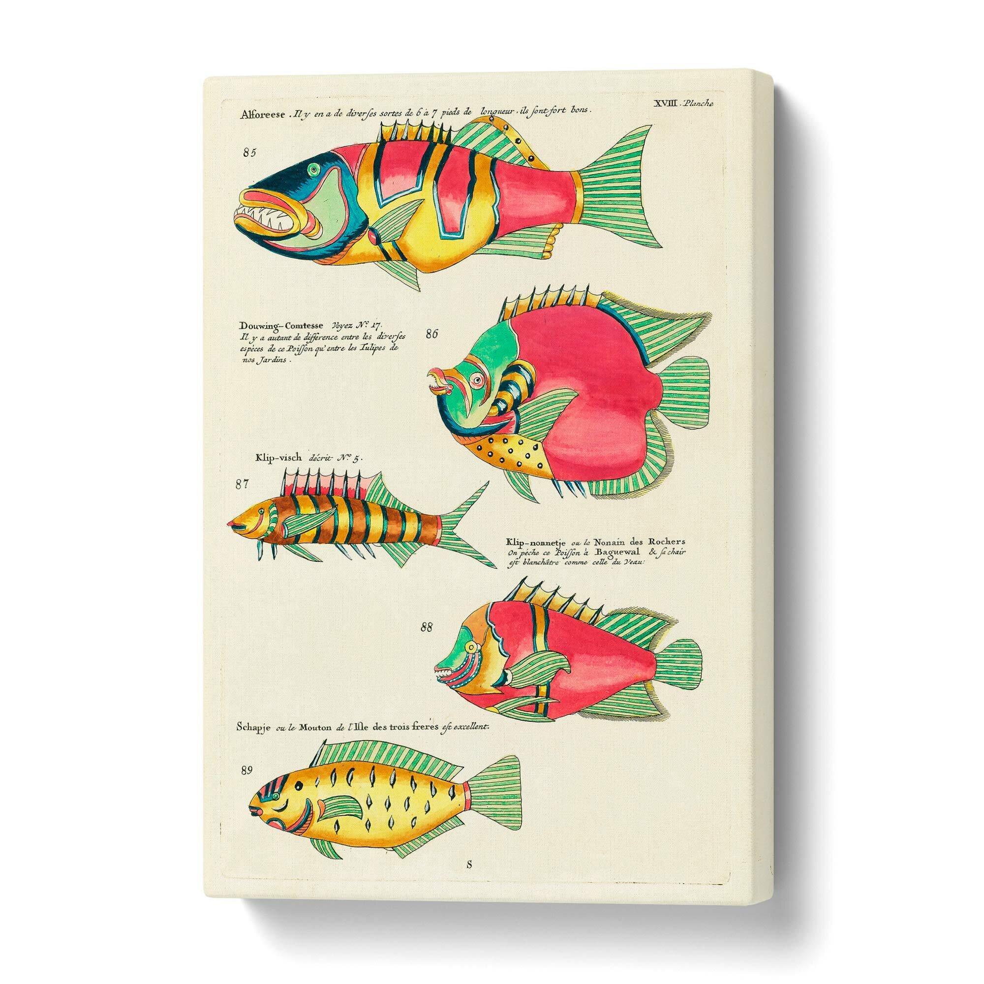 Leinwandbild East Indies Fish Illustrations XVIII by Louis Renard