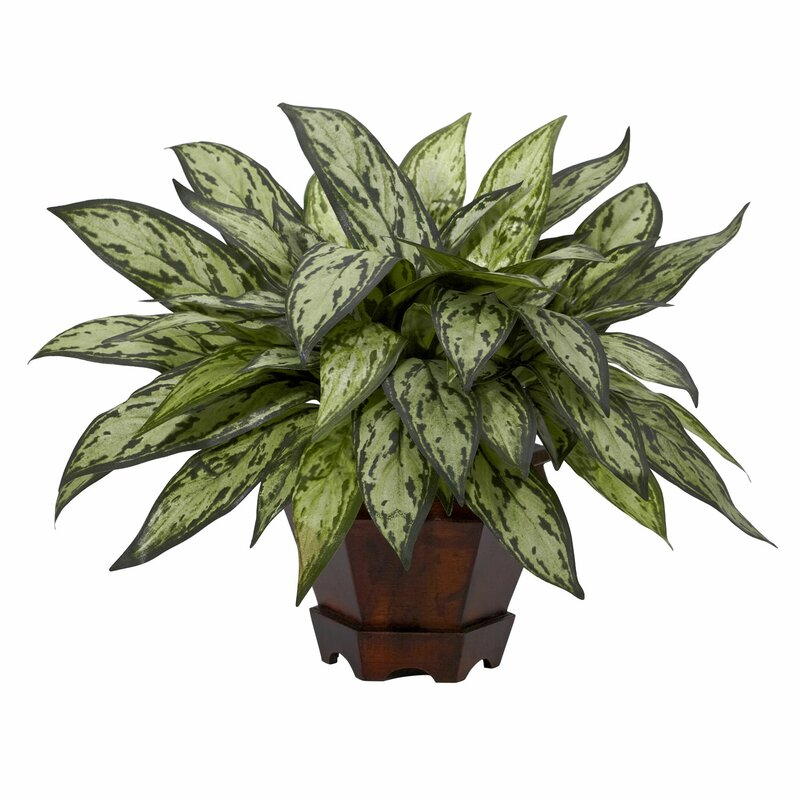 Faux Silver Queen Plant in Decorative Planter  | Silver Queen Plant