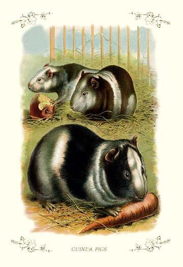 Buyenlarge Guinea Pigs Painting Print Wayfair