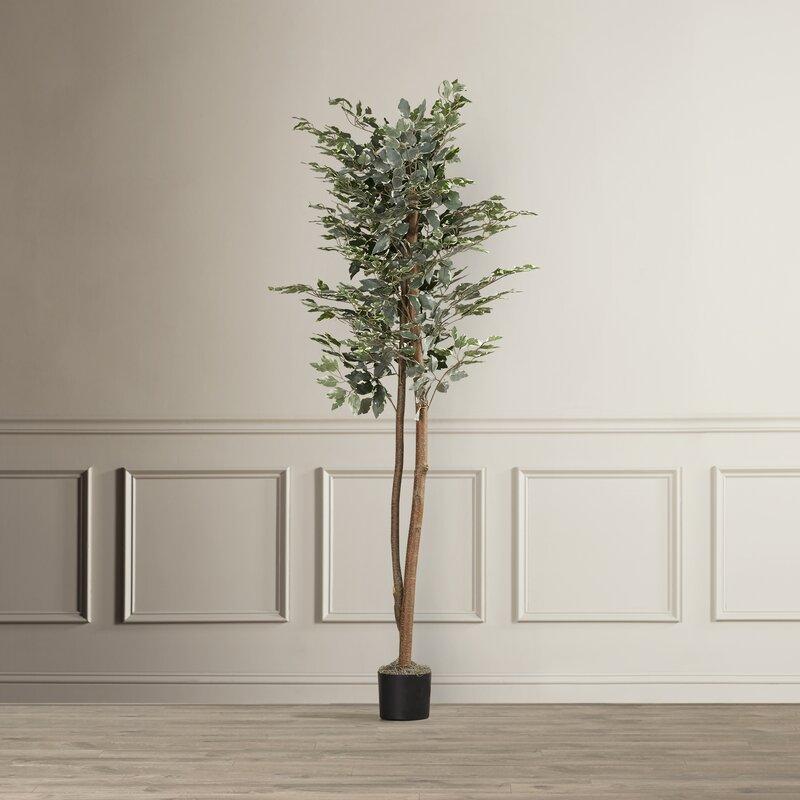 Alcott Hill Berry Variegated Ficus Tree In Pot Reviews Wayfair