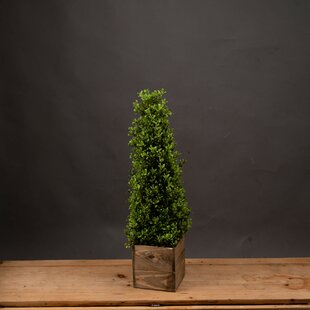 Artificial Foliage Topiary In Pot By The Seasonal Aisle