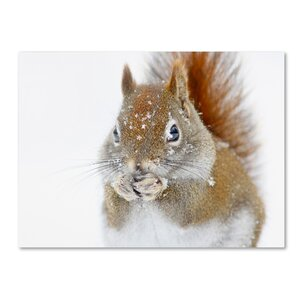 'Christmas Squirrel' Photographic Print on Wrapped Canvas