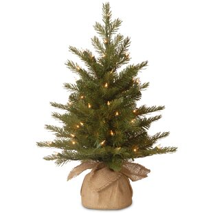 Nordic Pre-Lit Feel Real Spruce Small Tree. by The Holiday Aisle