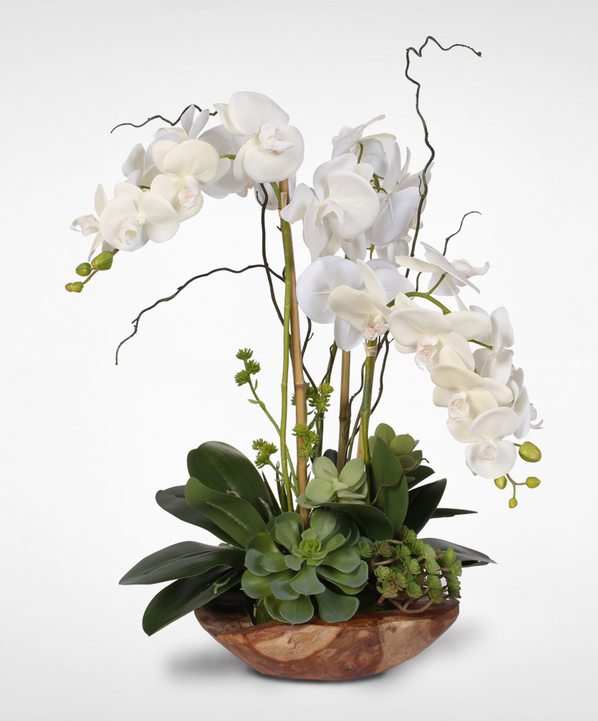 Primrue Real Touch Phalaenopsis Silk Orchid With Succulents Floral Arrangement Reviews Wayfair