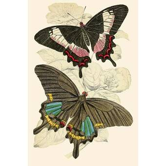 Evive Designs Butterfly Brocade Iv By Color Bakery Graphic Art On Wrapped Canvas Wayfair