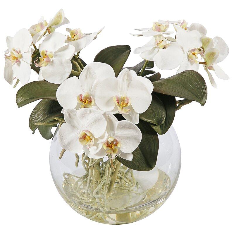floral home decor orchid floral design wayfair.htm jane seymour botanicals phalaenopsis orchid floral arrangement in  phalaenopsis orchid floral arrangement