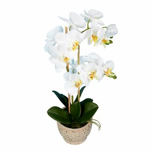 Artificial Phalaenopsis Floral Arrangement in Pot