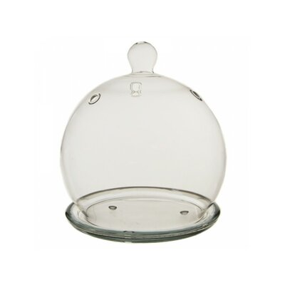 Hydroponic Glass Terrarium CYSExcel