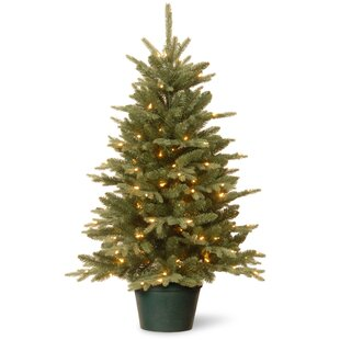 Evergreen 3' Green Artificial Christmas Tree with 100 Clear Lights