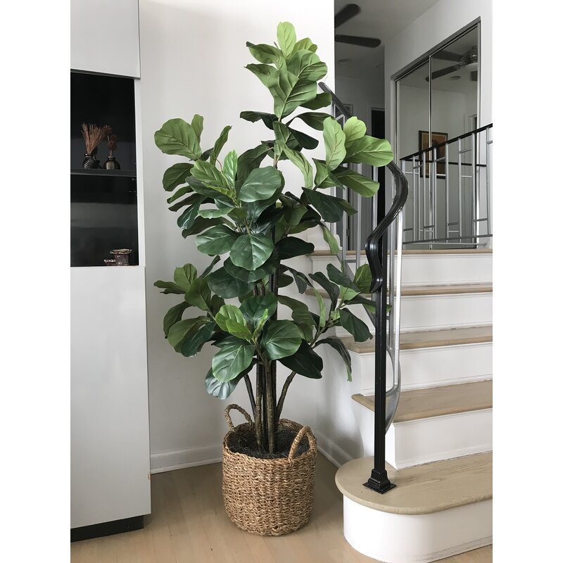 Fiddle Leaf Fig Tree with Basket