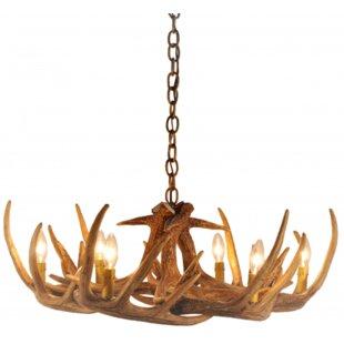 Millwood Pines Hattie 6-Light Novelty Chandelier