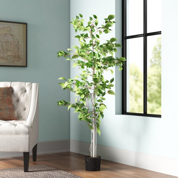 Real Birch Trees For Decorating  from secure.img1-fg.wfcdn.com