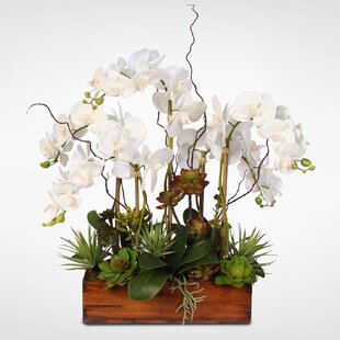 Cottage Phalaenopsis Silk Orchids with Succulents Floral Arrangement