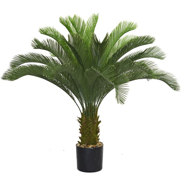 Palm In Pot.Cycas Palm Tree In Pot