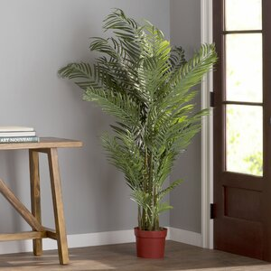 Areca Palm Tree Floor Plant in Pot