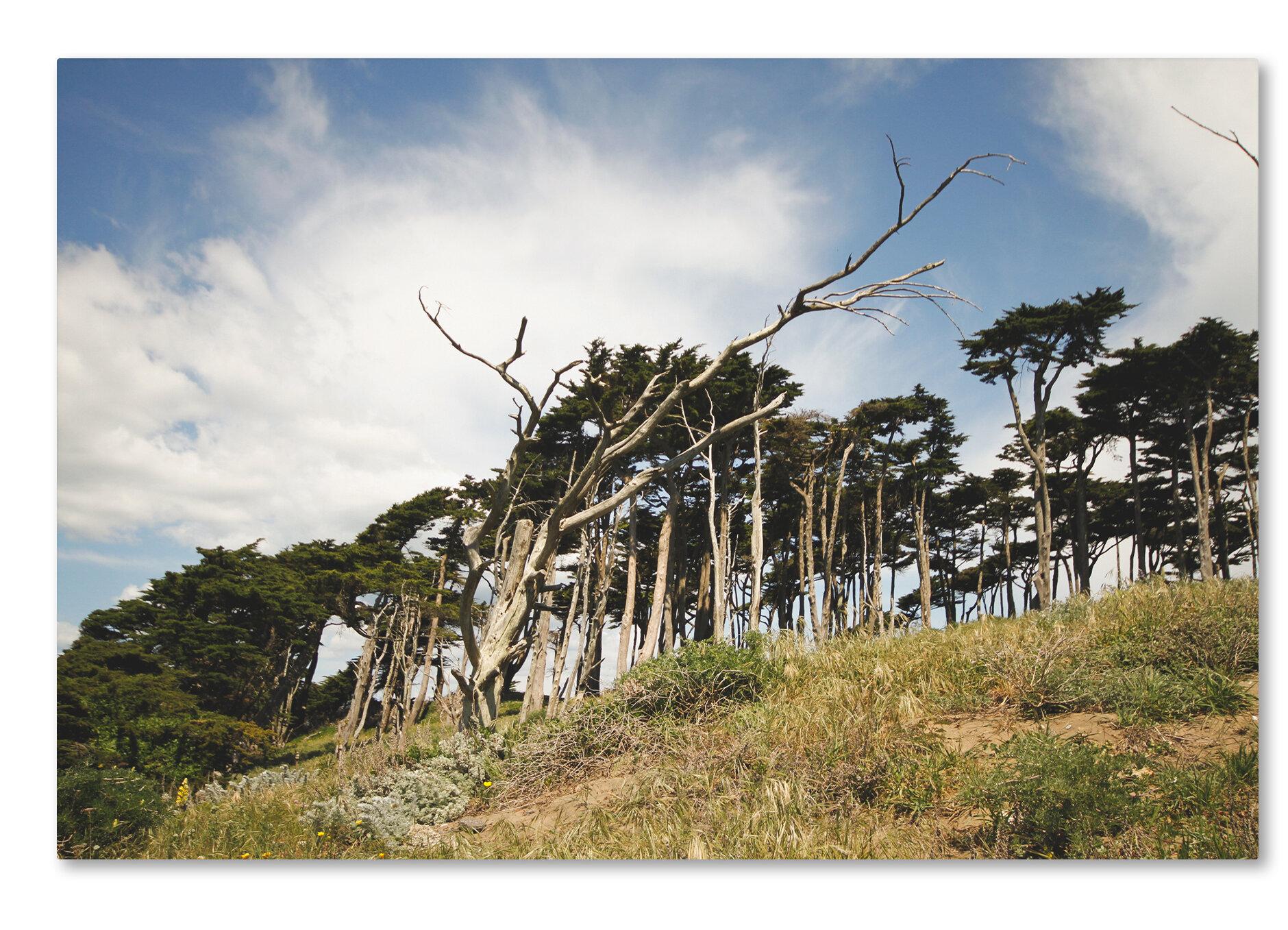 Trademark Art Presidio Trees By Ariane Moshayedi Photographic Print On Wrapped Canvas Wayfair