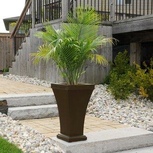 Bordeaux Self-Watering Plastic Pot Planter by Mayne Inc.