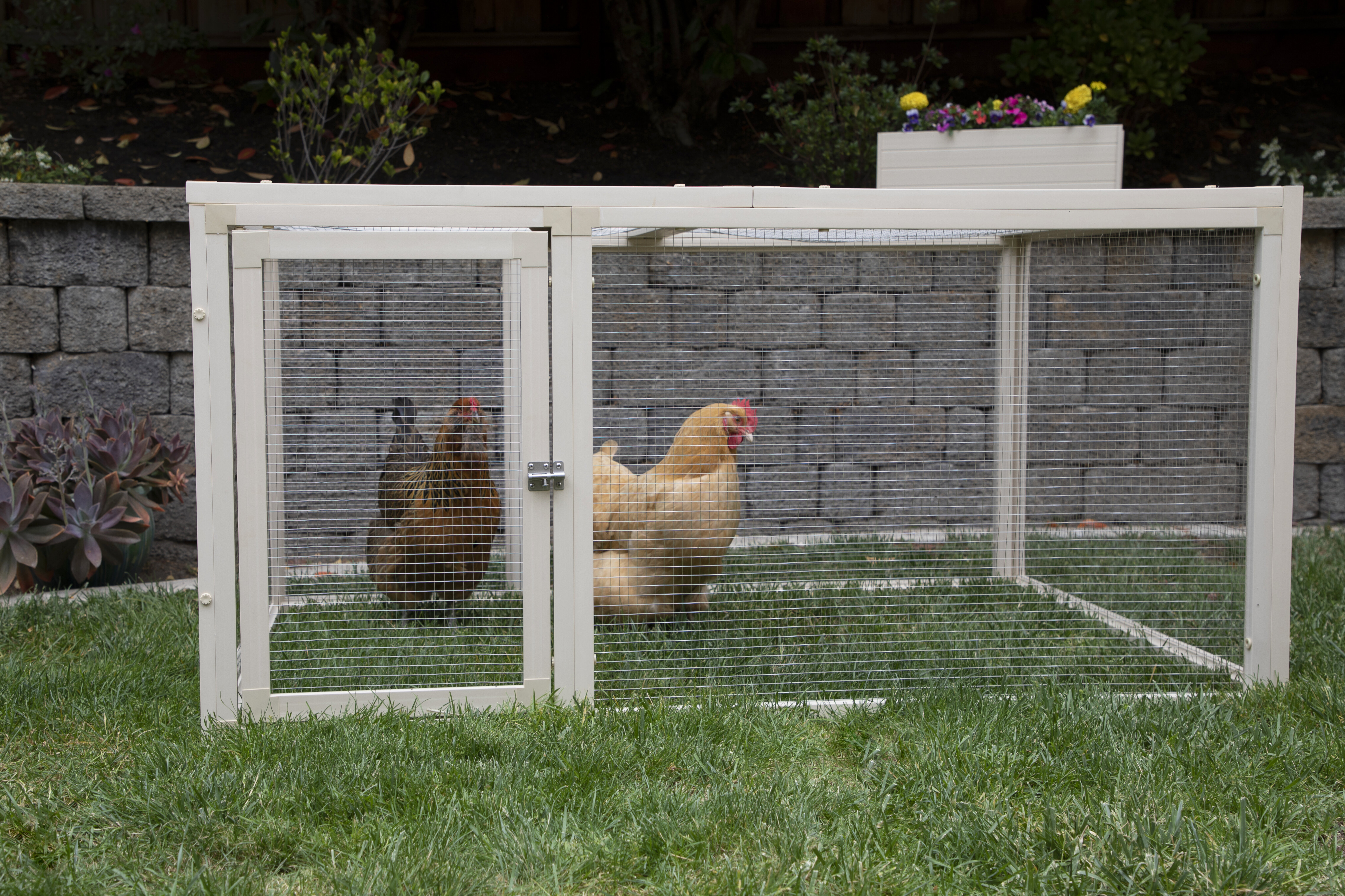 Archie Oscar Achilles Jumbo Chicken Coop With Wire Mesh For Up To 4 Chickens Reviews Wayfair