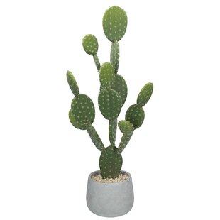Desktop Cactus Plant In Pot Image