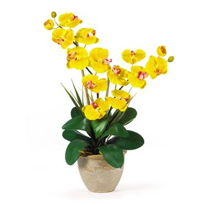 Double Phalaenopsis Silk Orchid Flower in Yellow