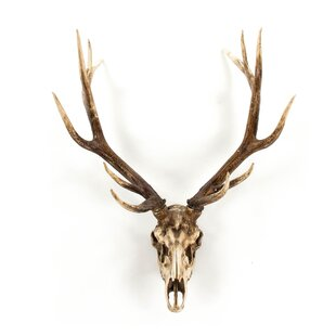 Deer skull decor wayfair deer skull wall dcor mozeypictures Gallery