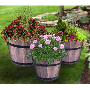 Best Flowers For Whiskey Barrels Flowers Healthy