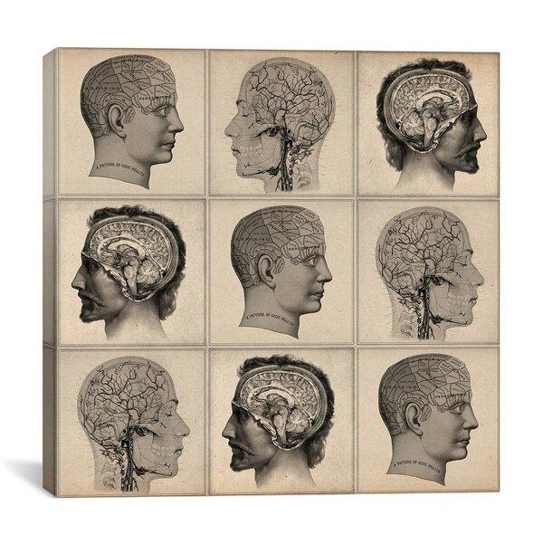 Human Anatomy Art Wayfair Ca