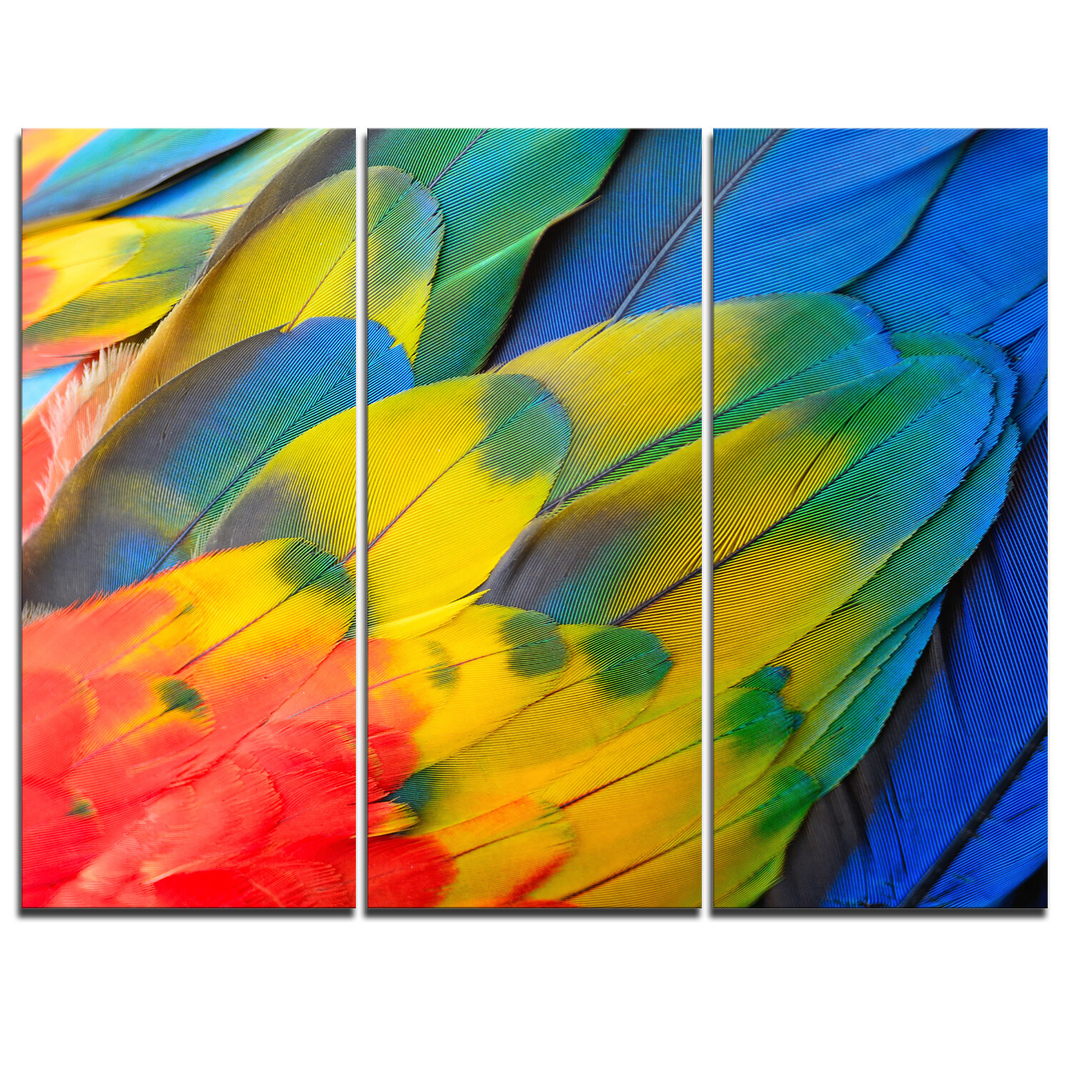DesignArt Scarlet Macaw Feathers - 3 Piece Graphic Art on Wrapped ...