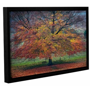 Autumn Tree 2 Framed Graphic Art on Wrapped Canvas by Charlton Home