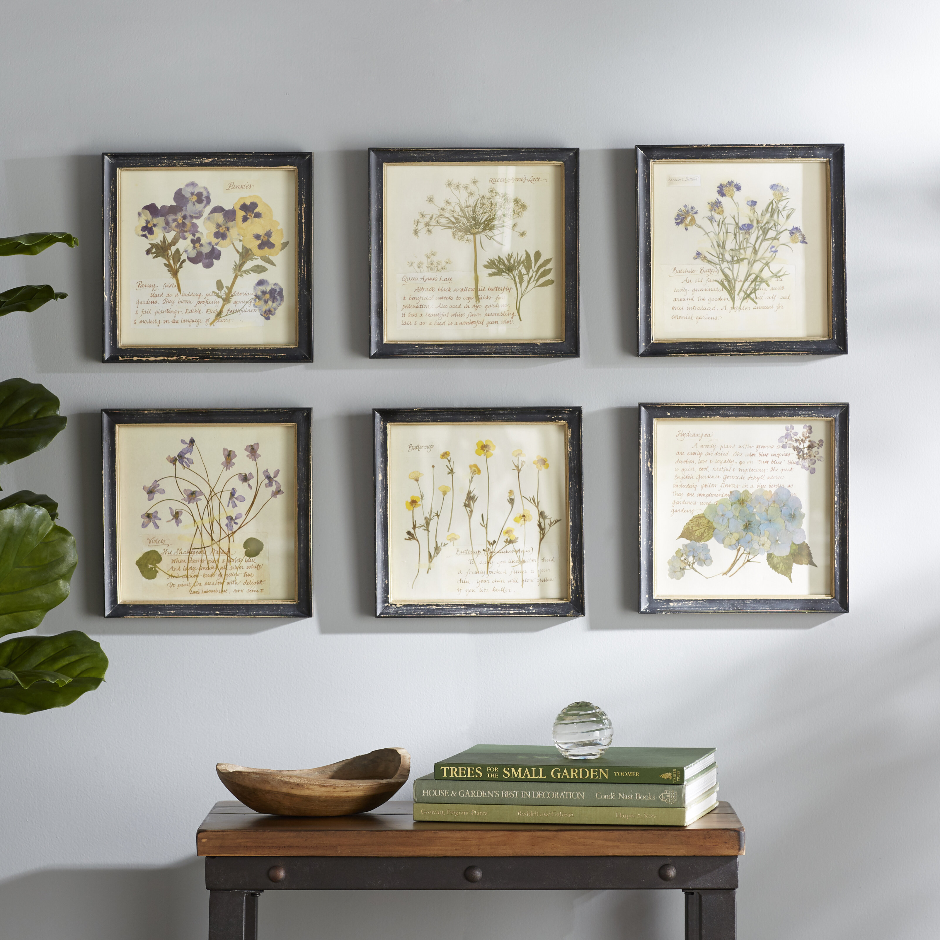 Birch Lane™ Heritage 'Pressed Flowers' 6 Piece Framed Graphic Art Print Set on Wood & Reviews | Birch Lane