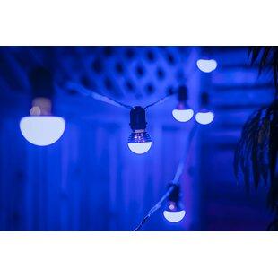 65 ft. 20-Light Globe String Light