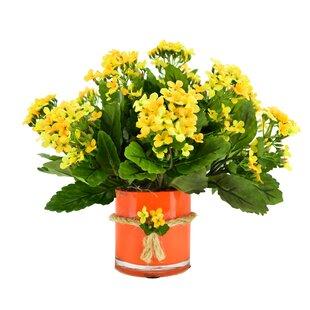 Kalanchoe Bouquet