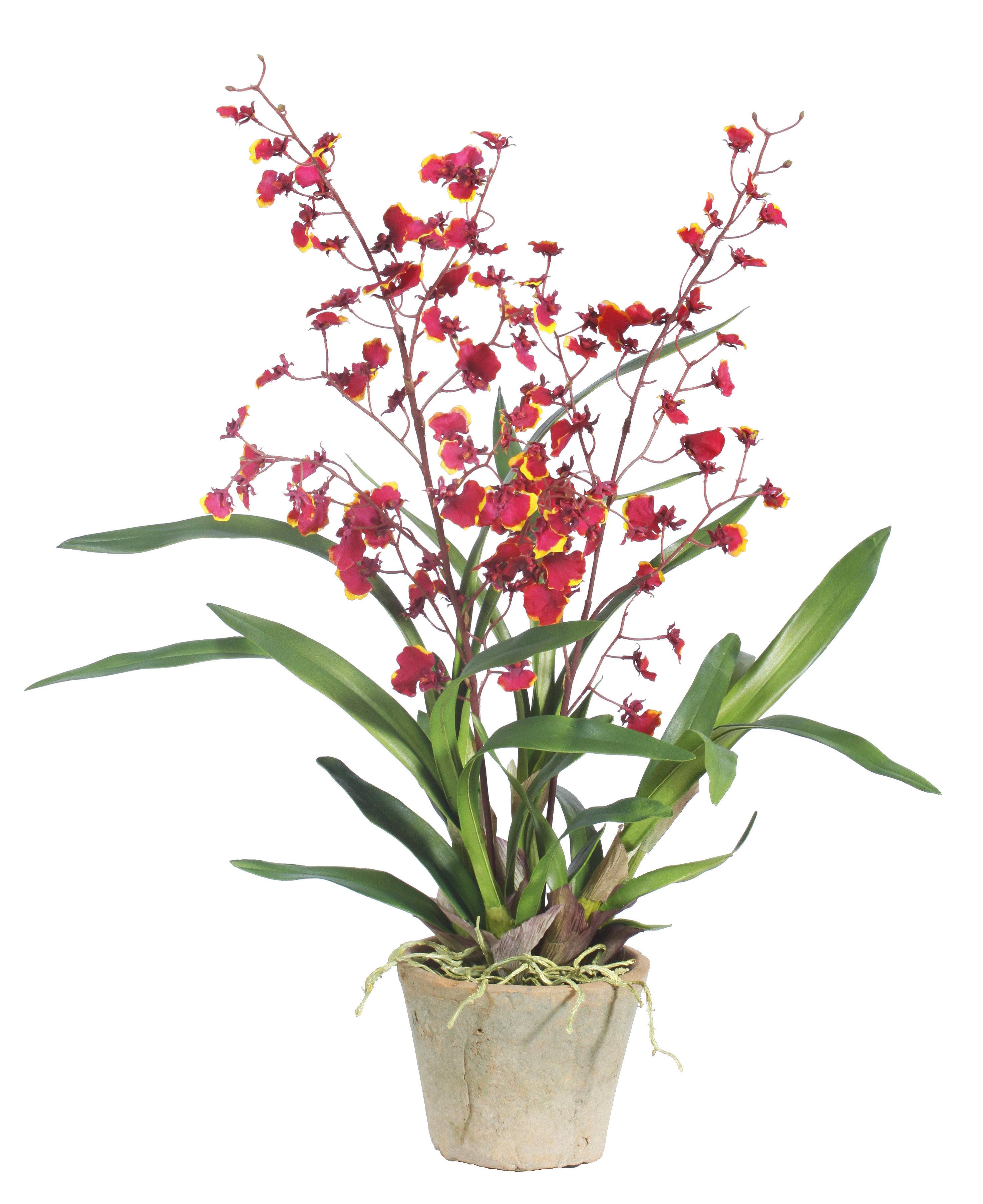 August Grove Oncidium Orchids Floral Arrangement In Pot Wayfair